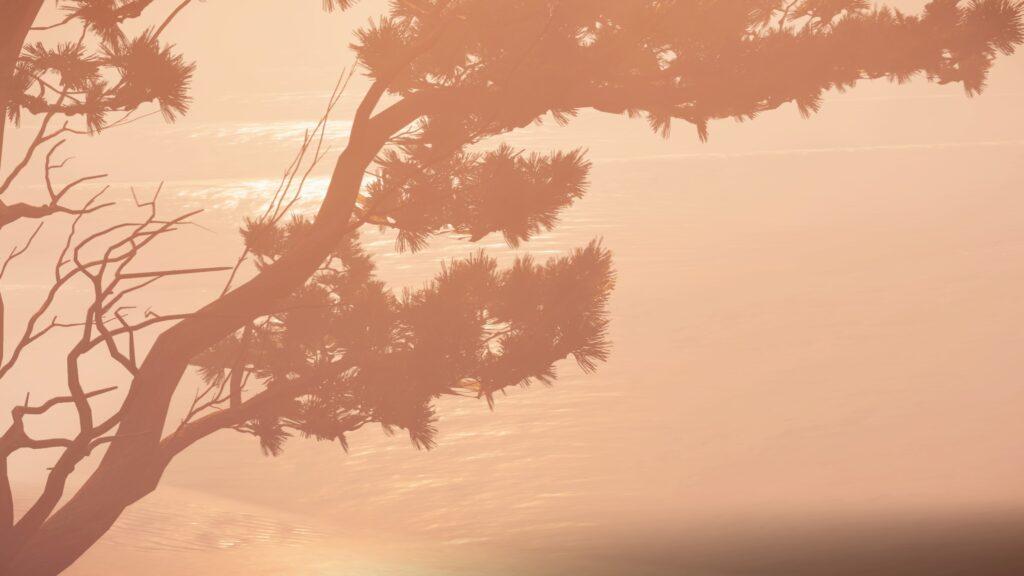 gros plan d'un arbre au dessus d'une plage avec une légère brume