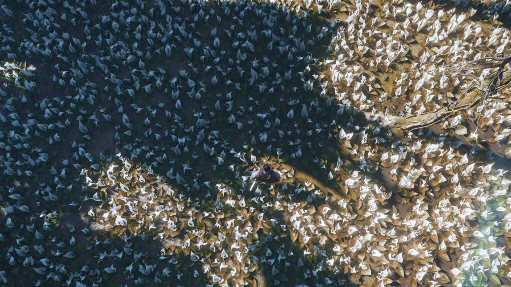 Contre plongée sur Jon au milieu d'un champ de fleurs